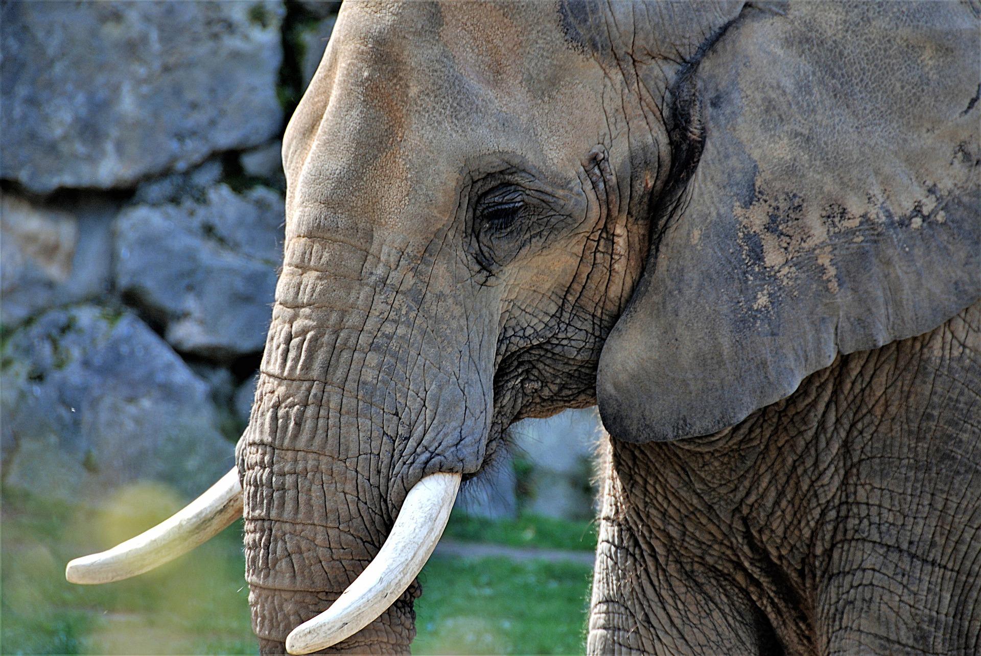elephant-3292752_1920
